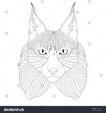 t shirt coloring page vector illustration lynx isolated black white stock vector
