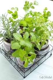 diy herb garden in mason jars crafts unleashed