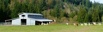 gorgeous 20 75 acre alpaca farm alpacas included la center