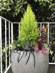 give your containers a seasonal makeover the seattle times