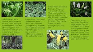 native rainforest plants the amazon rainforest ppt download