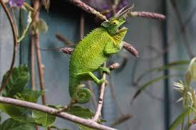 Seeking Lizard Review Mental Health Or What I Learned From My Lizard Camryn Daytona