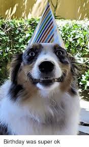 australian shepherd meme 25 best memes about birthday birthday memes