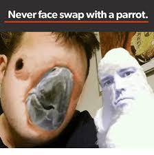 Parrot Meme - never face swap with a parrot face swap meme on me me