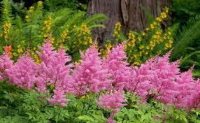 memorable ideas artificial topiary plants bright tree planting