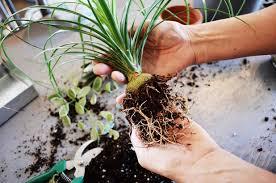What Is An Indoor Garden Called - diy project how to make a u0027kokedama u0027 string garden