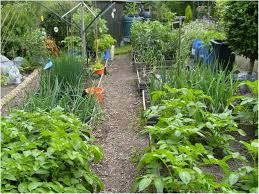 Vegetable Garden Soil Mix by Backyards Gorgeous Diy Backyard Vegetable Garden Raised Bed