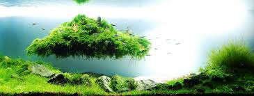Green Machine Aquascape The Importance Of Aquascaping Tanksfortheshrimp