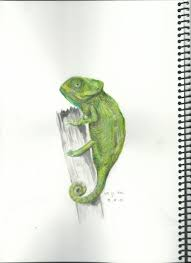 the ever changing chameleon needs some color but nice small