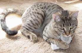 Cat Under Faucet Do Cats Need Baths