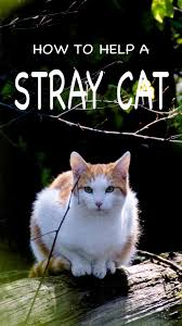 what to feed a stray cat and how to help stray cats and kittens how best to help a stray cat what to feed a stray cat and