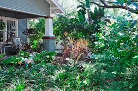 Backyard Shade Trees Bay Friendly Landscaping Made In The Shade