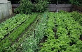 Garden Layout Tool Vegetable Garden Layout Tool Square Foot Garden Vegetable Garden