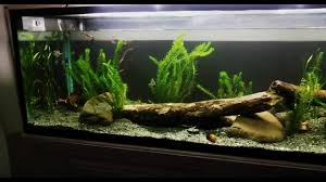 native aussie plants 6ft aussie native aquarium display youtube