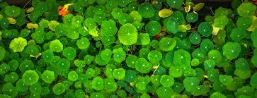 free stock photos of plants pexels