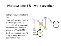 Light Independent Reactions Definition 3 8 8 2 Photosynthesis Ppt