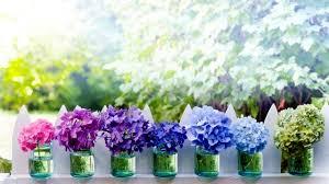 wholesale hydrangeas buy wholesale hydrangeas flowers archives floral trends diy