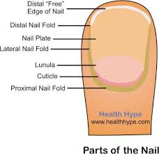 nails infection in children doktorbudak com