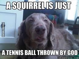 Stoned Dog Meme - meme watch 10 dog is the newest addition to the stoner dog