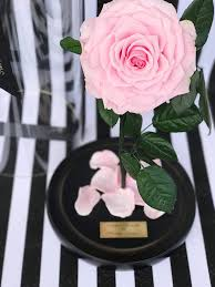 enchanted rose that lasts a year beauty and the beast rose real rose that last a year