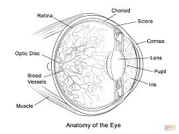 coloring pages free science labs pages page eye photo for