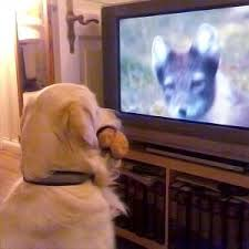 do dogs see what u0027s happening on tv sciencenordic