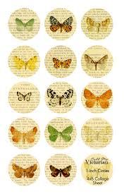 best 25 butterfly images ideas on pinterest butterfly