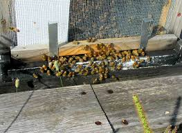 How To Get Rid Of A Beehive In Your Backyard A Year In The Life Of A Beekeeper Wiscontext