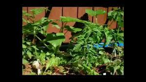 fish2food backyard mini farm system video mp4 youtube