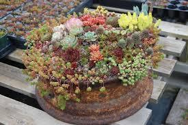100 unique container gardening ideas 1726 best flower boxes