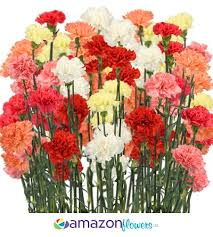 Wholesale Fresh Flowers Wholesale Carnation Bulk Carnation Wedding Carnation Fresh Cut