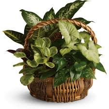 indoor house plants varieties