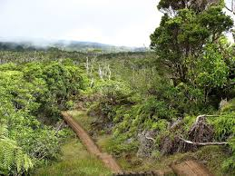 native rainforest plants hawaiian tropical rainforests wikipedia
