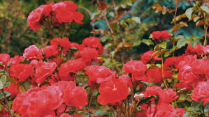 means ornamental plants grown for their decorations