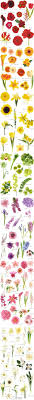 osiria u0027 rose rose flower and gardens