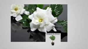 Gardinia Home Decor Gardinia Home Decor Home Decor