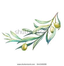 painting olive tree branch painted stock illustration 644328208