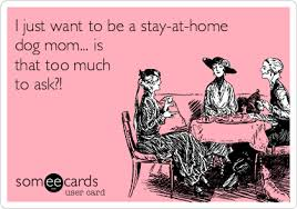 Dog Mom Meme - i just want to be a stay at home dog mom is that too much to