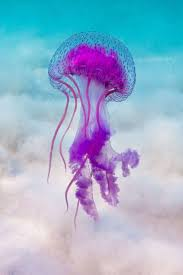 best 25 jellyfish ideas on pinterest jelly fish jellyfish