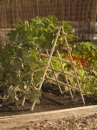 cedar a frame squash support buy from gardener u0027s supply