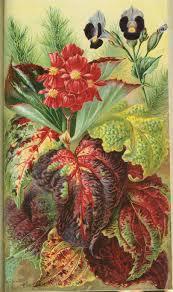 native plant nursery victoria victorian garden archives american gardening