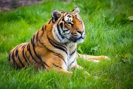 Mississippi wild animals images Laws on exotic pets for each u s state jpg