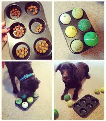 Bored At Home Create Your Own Zoo We Love This Simple Diy Dog Boredom Buster It Will Keep Any Dog