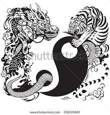 yin yang symbol tiger fighting stock vector 258526862