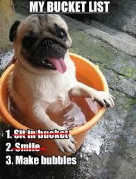 Meme Bucket - i has a hotdog bucket list funny dog pictures dog memes