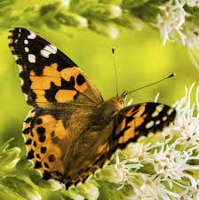 a butterfly release company inc visit our website first a
