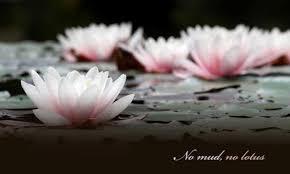 Lotus Flower Parts - padma mudra u2013 gesture of the lotus experience senara