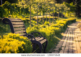 Bench Photography Garden Bench Stock Images Royalty Free Images U0026 Vectors