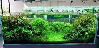 marvelous unique fish tank decorations 61 on home remodel ideas