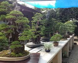 nihon de hajimete part 8 kimura u0027s garden planting bonsai and